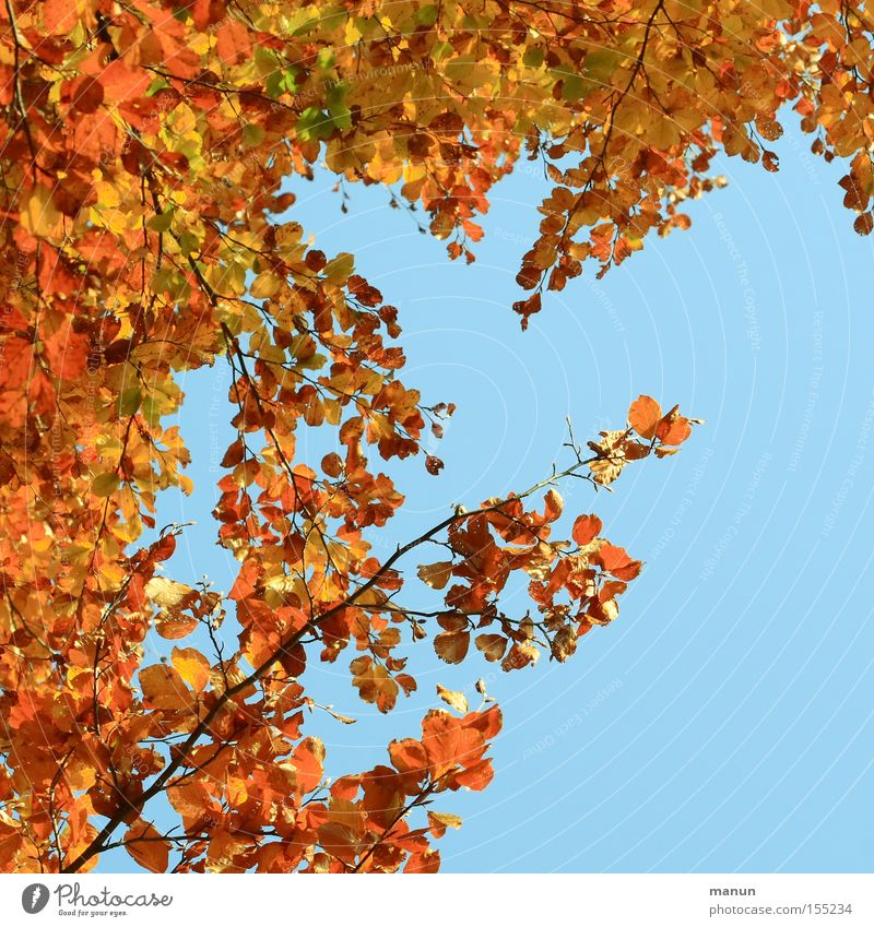 Colourful frame Autumn Autumnal Leaf Tree Transience Calm Multicoloured Nature Gold October Thanksgiving Autumnal colours golden october