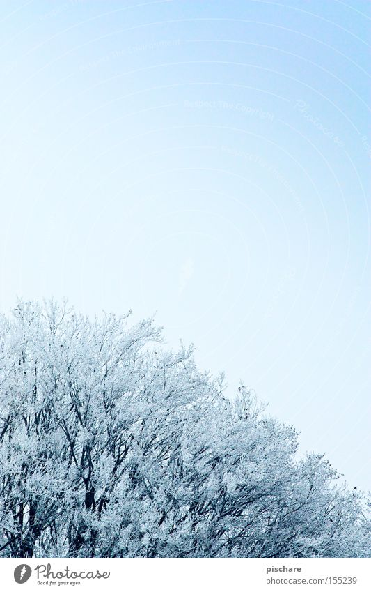 Sky Blue Tree Winter Cold Snow Ice Frost Hoar frost