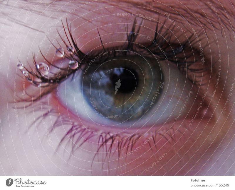 Human being Blue Eyes Colour Gray Drops of water Eyelash Eyebrow Lens Pupil Eye colour