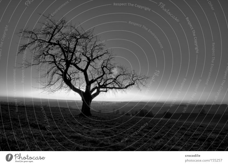 adhesion Tree Loneliness Winter Bleak Branch Wood Tree trunk Nature Mountain Hill Twilight Dark Fear Cold Oppressive Panic Black & white photo Spooky