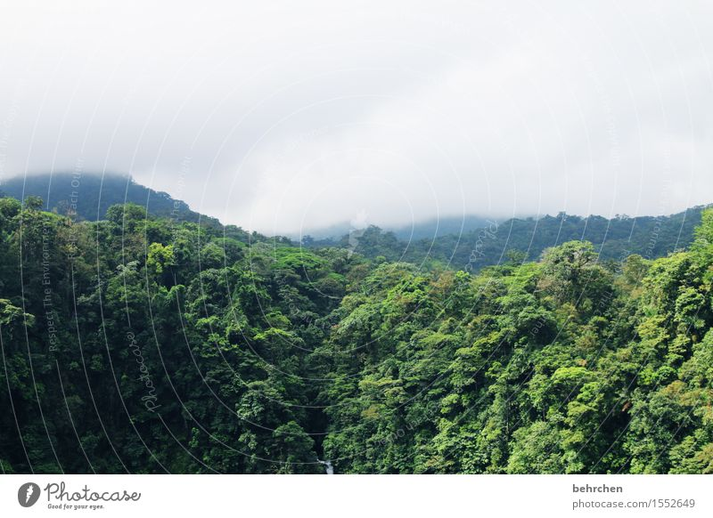 in the jungle Vacation & Travel Tourism Trip Adventure Far-off places Freedom Nature Plant Clouds Fog Rain Tree Leaf Forest Virgin forest Costa Rica Exceptional