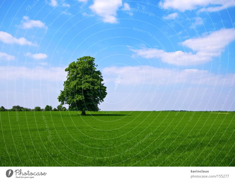 green pasture with lone standing tree Industry Nature Landscape Clouds Tree Grass Meadow Field Blue Green Grassland Lawn outdoor Pasture Rural Colour photo
