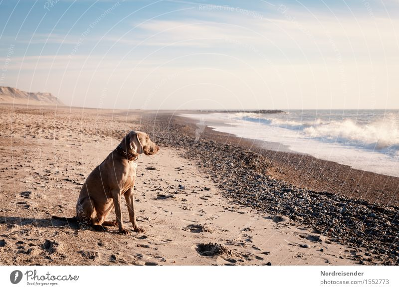 Dog Vacation & Travel Summer Water Sun Ocean Relaxation Clouds Animal Far-off places Beach Freedom Sand Waves Wind Beautiful weather
