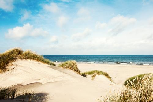 Summer in the dunes Harmonious Senses Vacation & Travel Tourism Far-off places Summer vacation Sun Beach Ocean Nature Landscape Sand Water Clouds