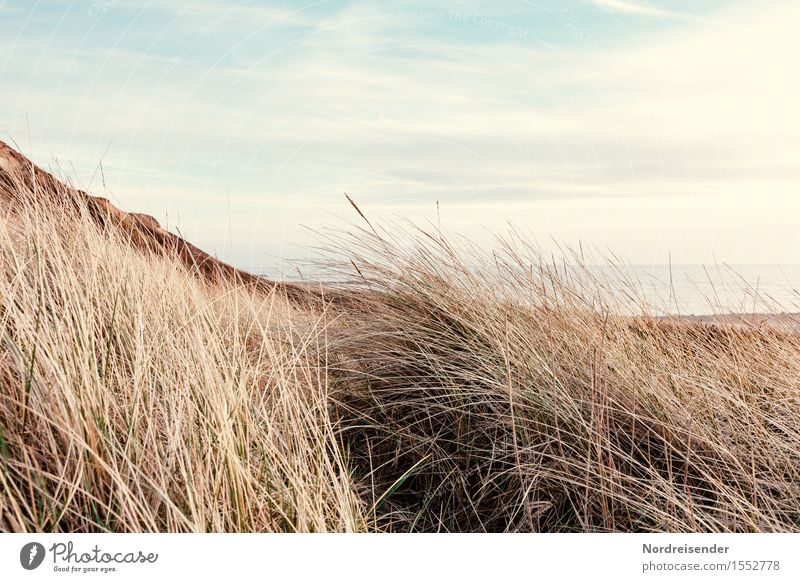 dune grass Vacation & Travel Beach Ocean Nature Landscape Plant Sky Clouds Beautiful weather Grass Coast North Sea Baltic Sea Fresh Longing Wanderlust