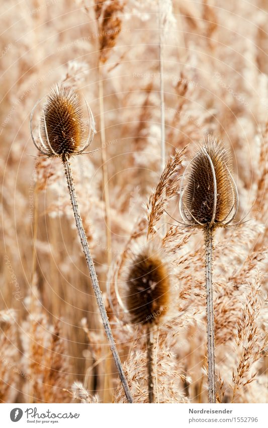 Nature Plant Landscape Calm Winter Autumn Natural Grass Time Lake Brown Moody Esthetic Happiness Transience Friendliness