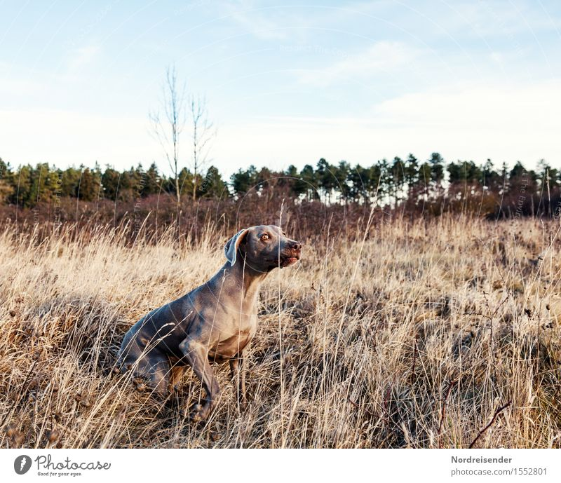 Dog Nature Plant Landscape Animal Forest Autumn Spring Meadow Grass Playing Leisure and hobbies Wait Observe Beautiful weather Curiosity