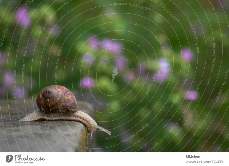 no limits Snail Snail shell Feeler Mucus Slimy Garden Multicoloured Green Stone Stairs Stone steps Edge Slowly Investigation Expedition Trip Park Hello, Jutta!