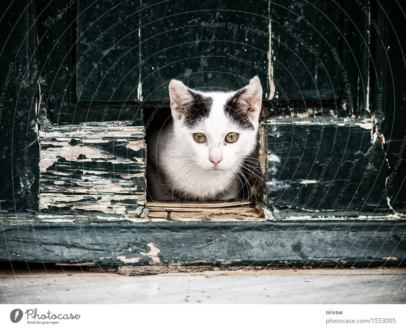 cat flap Vacation & Travel Trip City trip Summer vacation Village Deserted House (Residential Structure) Building Wall (barrier) Wall (building) Door Animal Pet