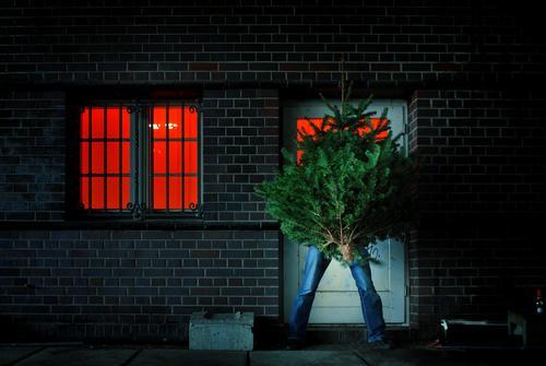 kick Christmas & Advent Christmas tree Door Street Biogradable waste Logistics Jewellery Tree Fir tree Window Red Feasts & Celebrations Outside the door.