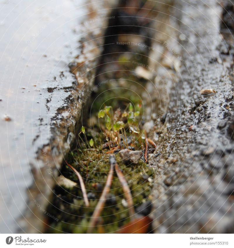 Plant Loneliness Autumn Rain Wet Growth Train station Moss Fine Arrange Survive Vulnerable Macro (Extreme close-up) Plantlet Fir needle Exposed