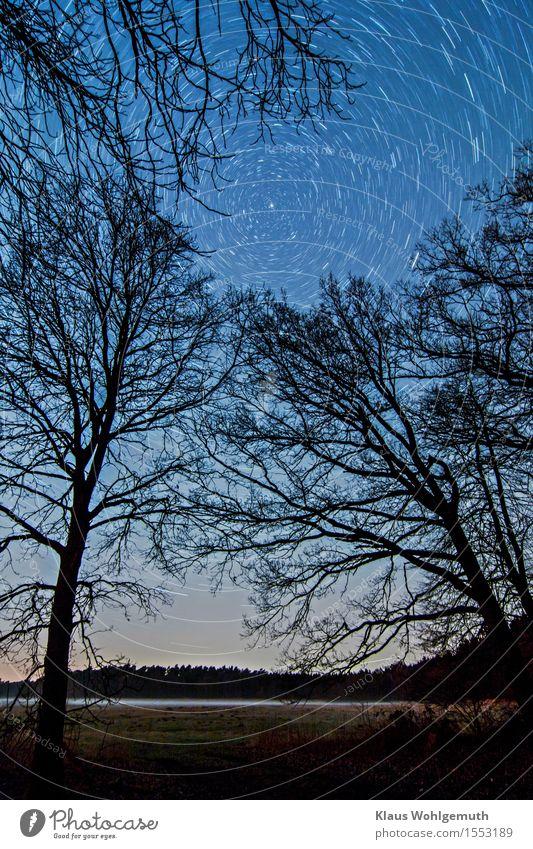 panta rhei Environment Landscape Sky Night sky Stars Horizon Spring Winter Fog Tree Grass Meadow Forest salow Rotate Illuminate Creepy Blue Gray Black