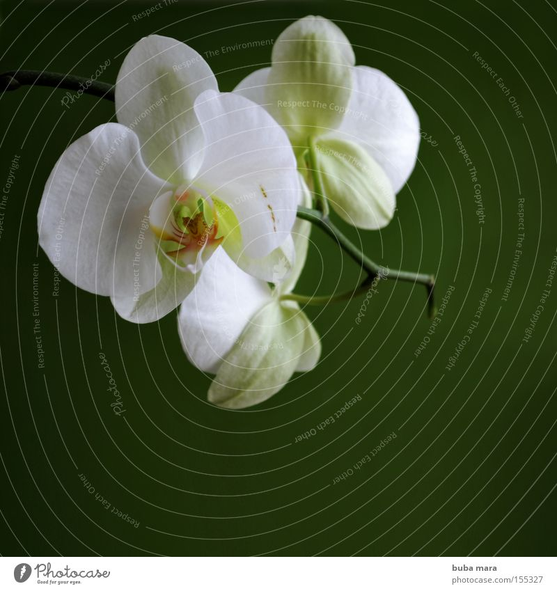 white in green Orchid Flower Plant Green Nature Growth Shadow Contrast Blossom Exotic Stalk Environment