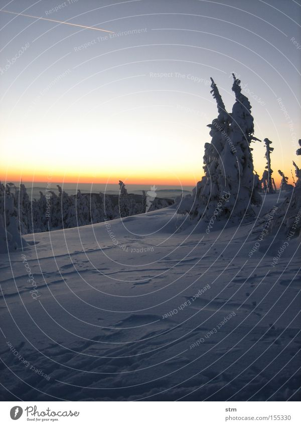 fairytale forest Forest Tree Hill Mountain Twilight Winter Winter mood Sunset Romance Snowdrift Copy Space Bright background Horizon Vapor trail Color gradient