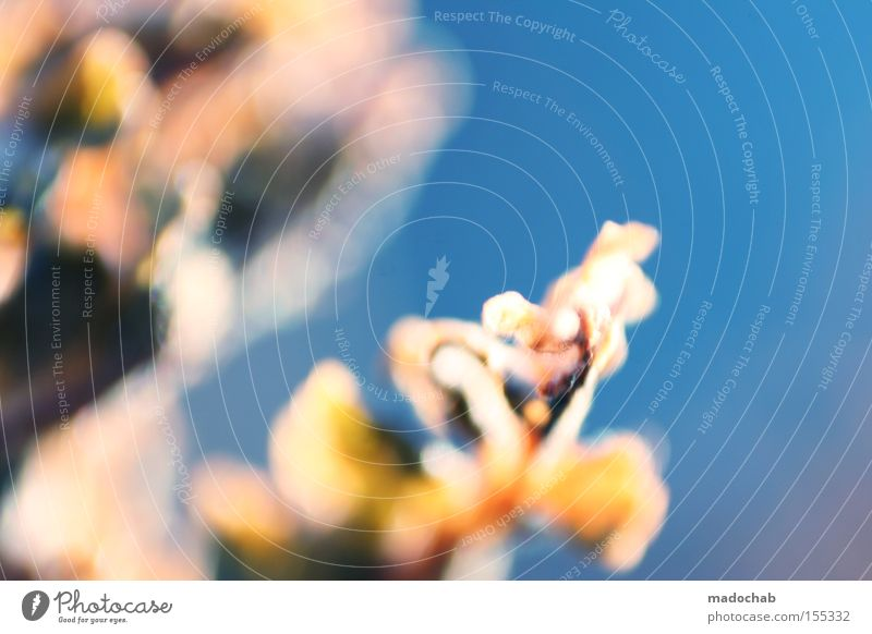 spring awakening Plant Flower Blossom Sky Blue Life Hope Blur Growth Abstract Transience