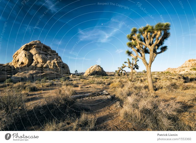 Joshua Tree Well-being Contentment Senses Relaxation Calm Vacation & Travel Summer Mountain Environment Nature Landscape Plant Sand Sky Clouds Climate