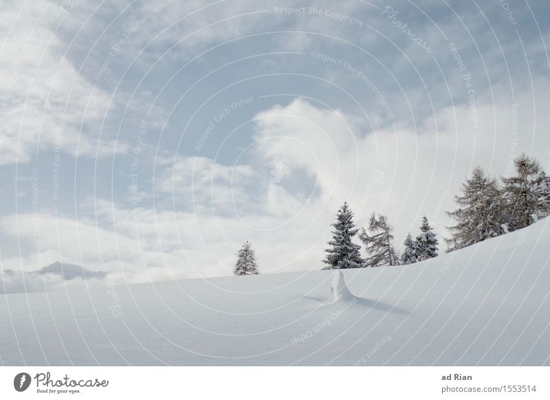 spring Ski run Nature Landscape Sky Clouds Winter Beautiful weather Ice Frost Tree Foliage plant Wild plant Hill Alps Mountain Peak Snowcapped peak Freeze Cold