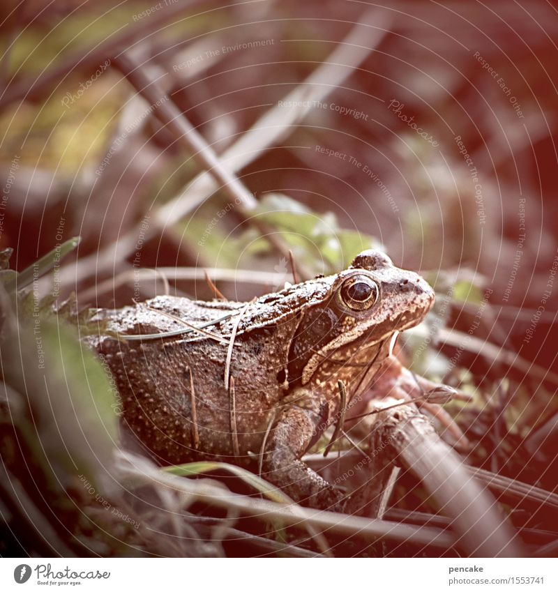 RISEN FROM POWER Nature Elements Sand Spring Bushes Forest Bog Marsh Animal Wild animal Frog 1 Sign Famousness Success Naked Wet Slimy Beginning Mysterious Life