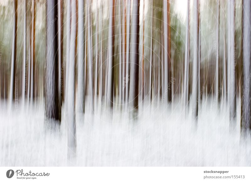 Abstract winter forest artistic artsy Pine Tree pines Winter Snow Forest blurry Blur