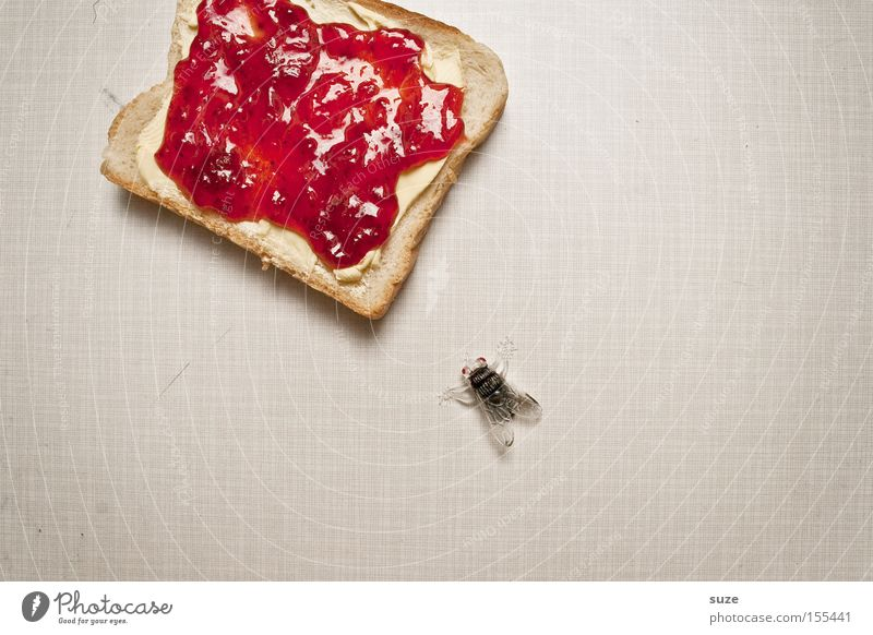 meal Food Bread Jam Nutrition Breakfast Organic produce Vegetarian diet Table Kitchen Fly Decoration Plastic Delicious Sweet Toast Butter Sense of taste Insect