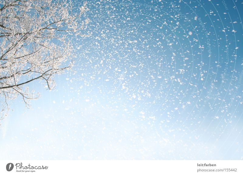 snow flurries Snow Snowfall Winter Cold December January Trickle Tree Branch Sky Worm's-eye view Snowstorm Blue White