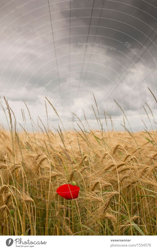 Nature Summer Landscape Loneliness Clouds Environment Religion and faith Field Energy industry Growth Power Success Uniqueness Hope Belief Poppy