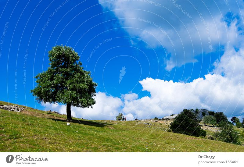Lonely Tree Sky White Green Blue Clouds Loneliness Grass Mountain Spring Stone Hill Rural