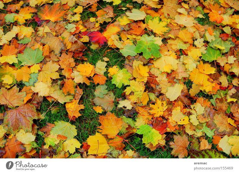press Autumn Leaf Colour Autumnal colours Multicoloured Nature Tree Meadow