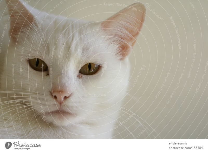 Cat White Jake Cat lover Cut down Cat eyes Design Animal Cat Face Cat White Face Cat Animals Cat Outdoor cat photograph
