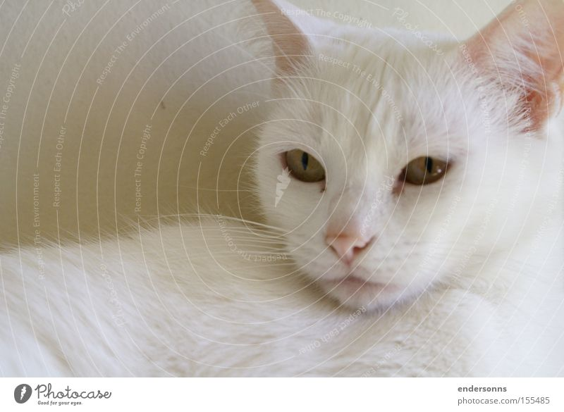 Cat White Jake Cat eyes Cat lover Design Animal Cut down Cat White Face Cat Animals Cat Outdoor cat photograph