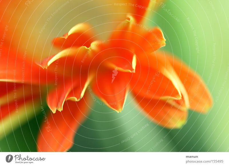spring freshness Close-up Detail Abstract Copy Space right Copy Space top Copy Space bottom Shallow depth of field Beautiful Life Harmonious Well-being Senses