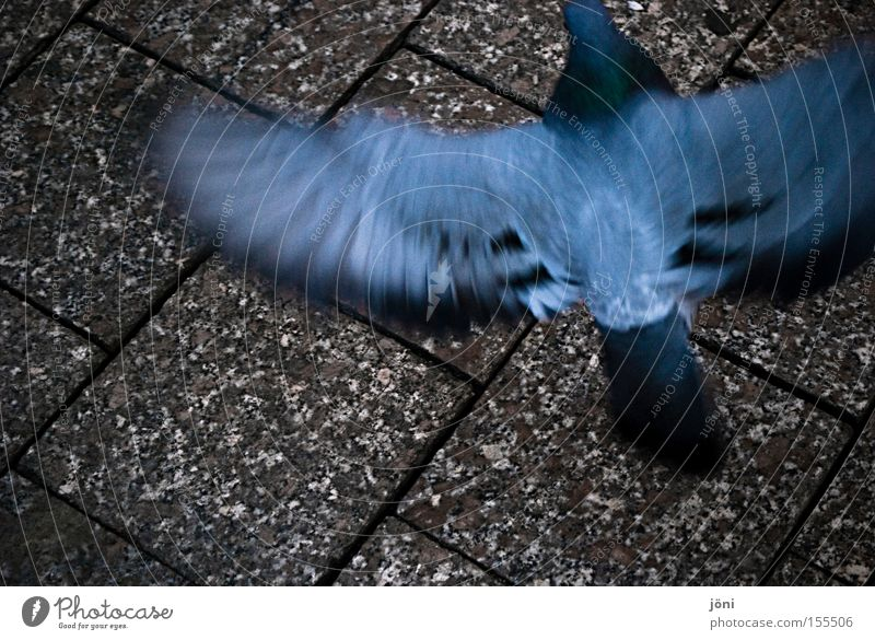 City Animal Movement Bird Rat Peace Feather Wing Traffic infrastructure Pigeon Brash Swing Plagues Pedestrian precinct