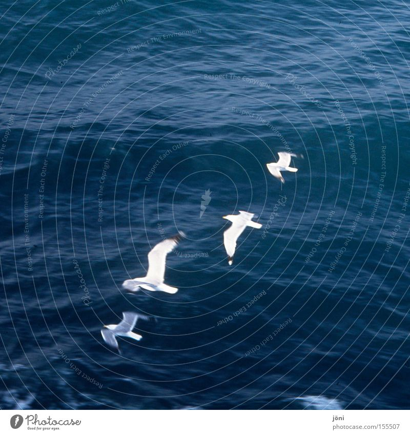 formation seagulls Ocean Vacation & Travel Water Waves Relaxation Watercraft Sailing Line Formation Bird Beach Coast go boating Boating trip waterfowl Movement