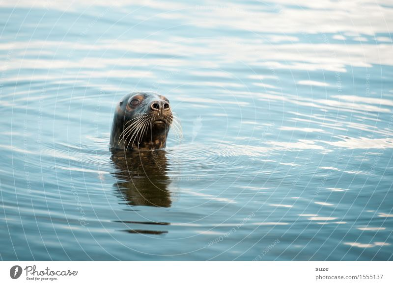 What? Ocean Waves Environment Nature Animal Water Wild animal Animal face 1 Swimming & Bathing Observe Authentic Funny Curiosity Cute Blue Attentive