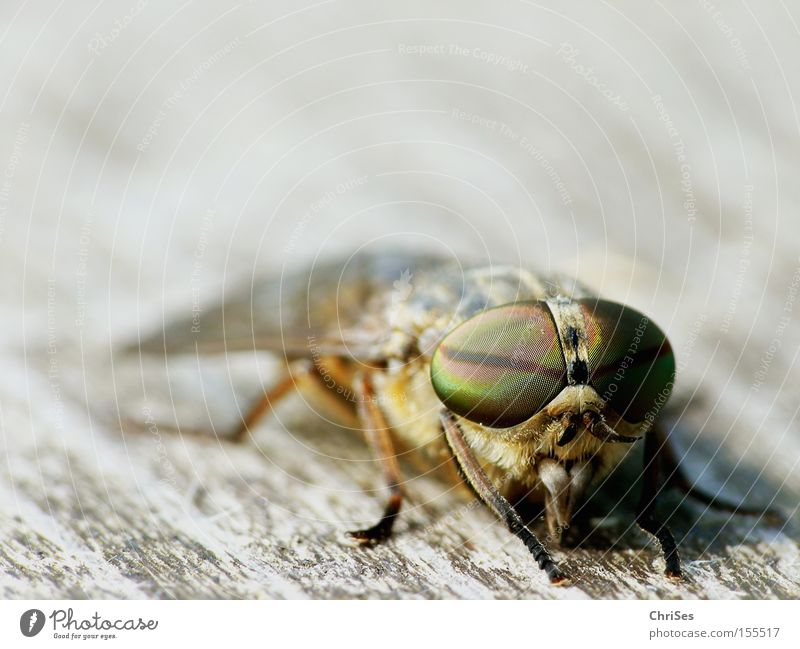 Eyes Animal Fear Fly Insect Blood Panic Mosquitos Suck Brakes Dipterous Compound eye