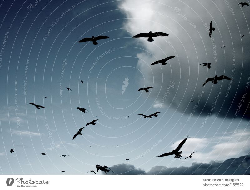 flying Bird Sky Clouds Air Weather Seagull Lake Ocean Thunder and lightning Rain Blue White