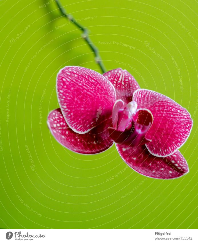 Rich in contrast Exotic Environment Nature Plant Flower Orchid Blossom Growth Green Pink Stalk Multicoloured Contrast
