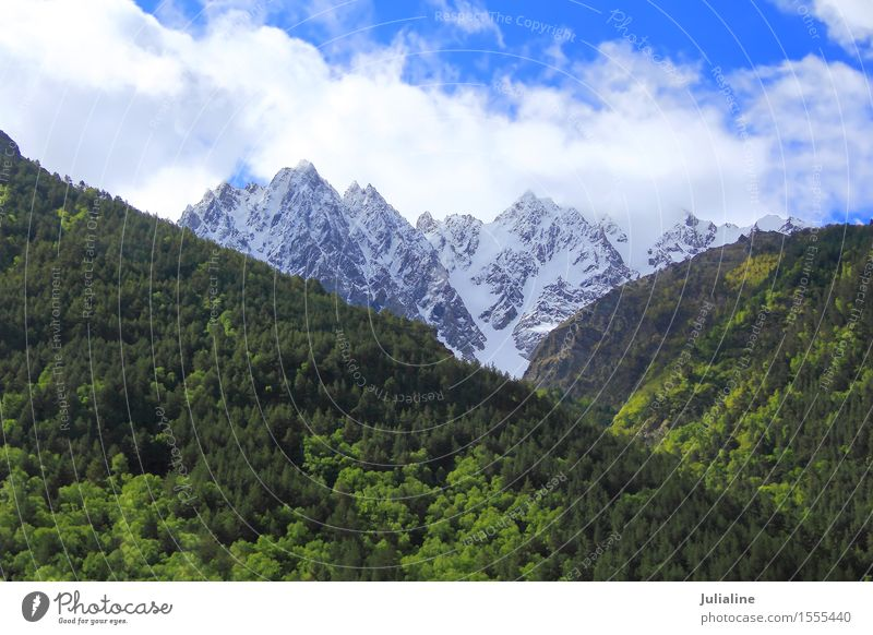Landscape with Caucasus mountains Snow Mountain Nature Tree Leaf Forest Hill Rock Peak Glacier Stone Wild Green White Dombai Altimeter Cliff Europe Height ice