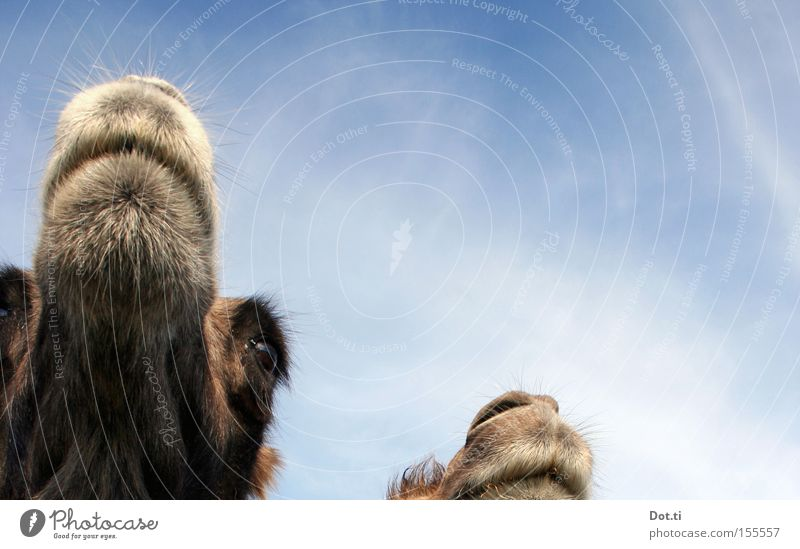 Sky Clouds Eyes Animal Head Brown Funny Pair of animals Animal face Soft Observe Curiosity Pelt Watchfulness Mammal