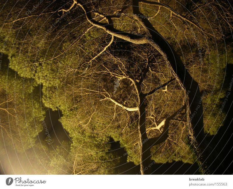 Plants want the light Night Light Dark Tree Summer night Branch Shadow Green
