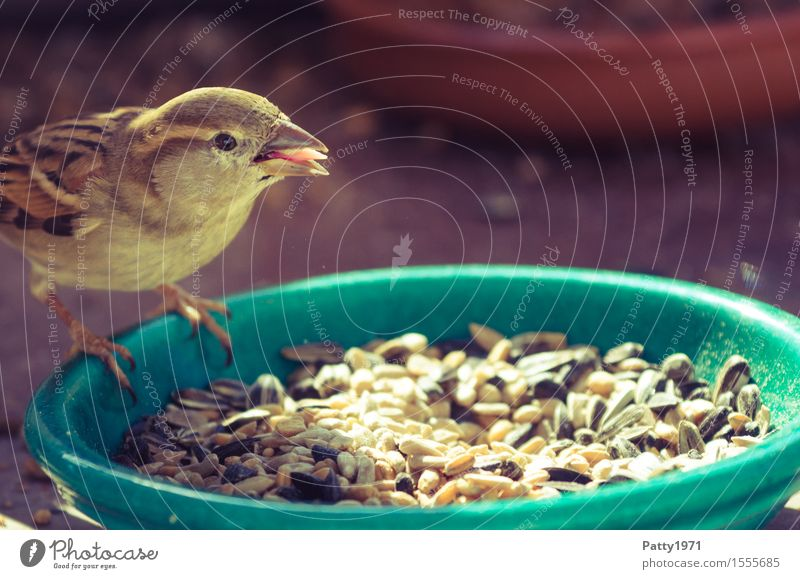 Nature Animal Brown Bird Wild animal To feed Feeding Sparrow Passerine bird