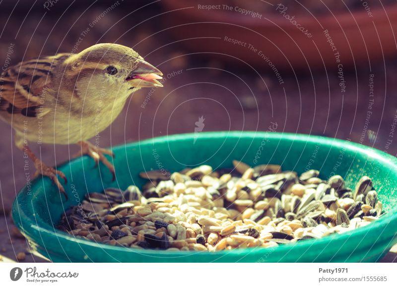 sparrow Wild animal Bird Sparrow Passerine bird 1 Animal To feed Feeding Brown Nature Colour photo Exterior shot Deserted Day