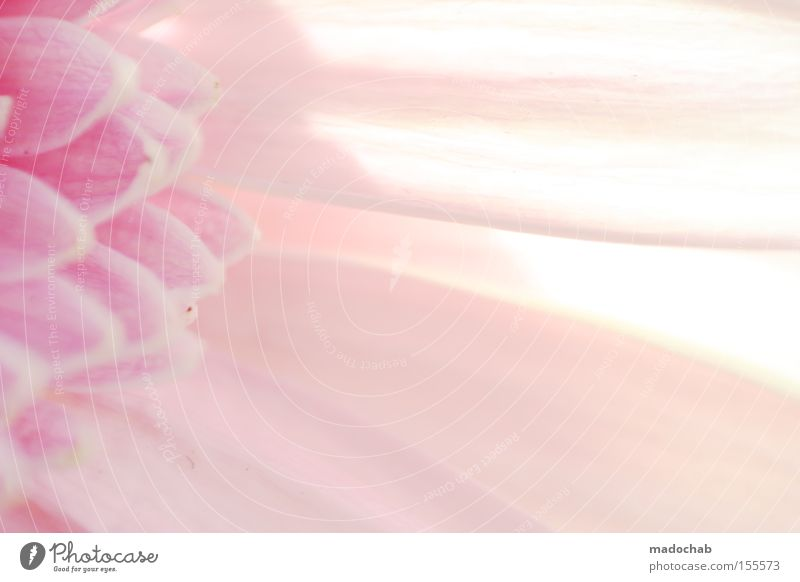 The purity of innocence Pink Colour Dye Blossom Structures and shapes Background picture Abstract Light Flower Plant Blur Smooth Soft Delicate Emotions