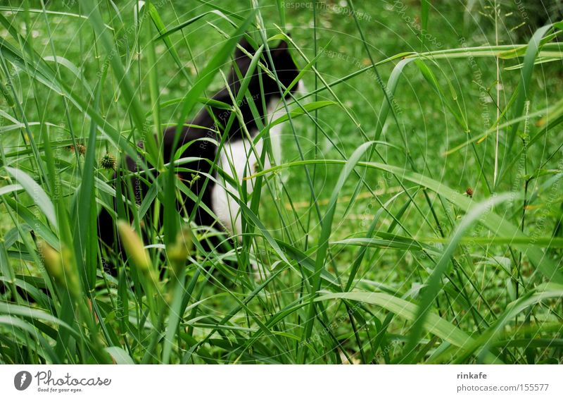 On the lookout Meadow Green Cat Tepid Hunting Grass Blade of grass Domestic cat Detail Mammal