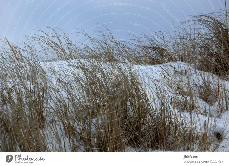 beach day Environment Nature Landscape Sand Sky Cloudless sky Sun Winter Beautiful weather Ice Frost Snow Plant Grass Bushes Coast Baltic Sea Cold marram grass