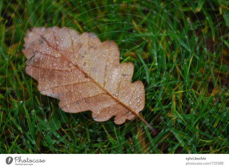 Water Green Leaf Loneliness Meadow Autumn Grass Rain Brown Wet Drops of water Transience Seasons Dew Oak tree