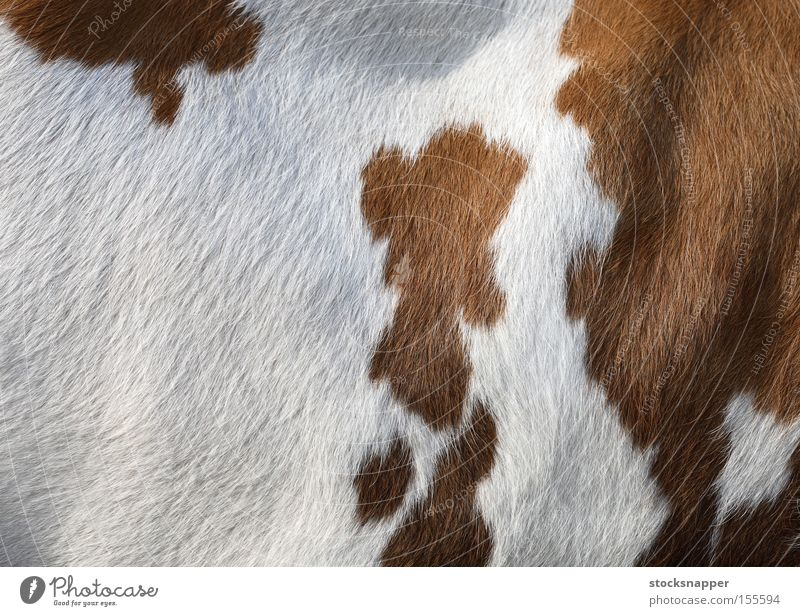 Cow Mammal Animal White Brown Side Skin furry texture Background picture