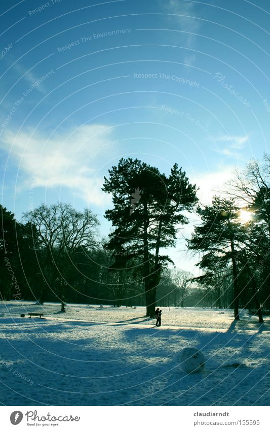Tree Winter Calm Cold Snow Landscape Park Frost To go for a walk Beautiful weather Winter's day Snow ball