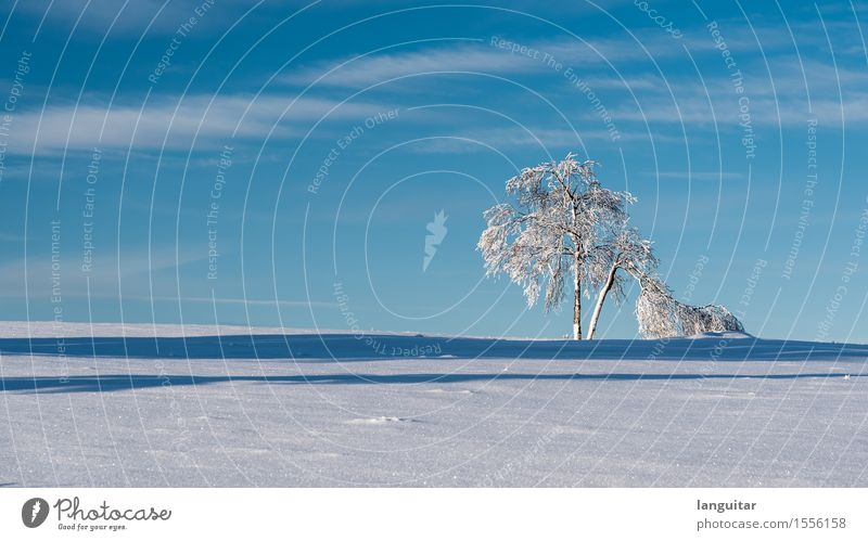 Sky Blue White Tree Landscape Winter Cold Snow Germany Isolated (Position) Minimalistic Fragile Winter vacation Birch tree Topple over