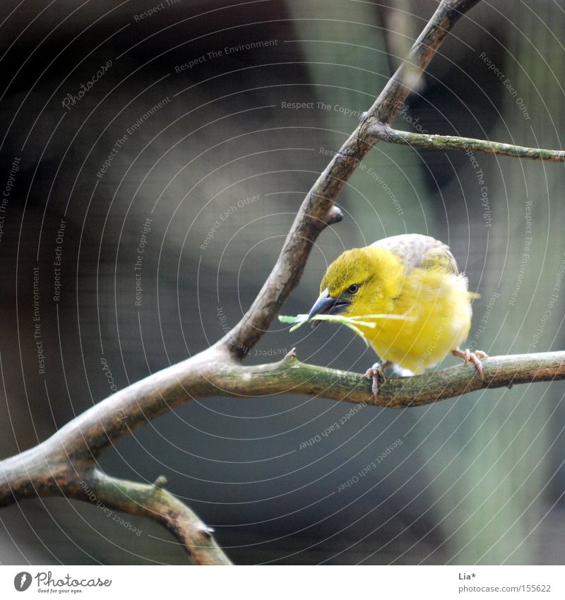 collector Aviation Bird Collection Yellow Branch Twig Square Nest-building Feather Beak Colour photo Exterior shot